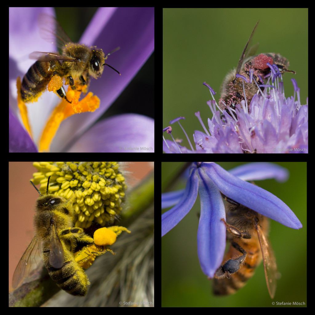 Collage_Pollenhoeschen